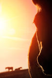 Horse portrait with warm backlight Royalty Free Stock Photos