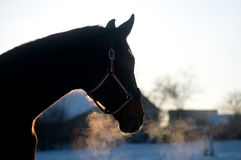 Horse portrait in winter. Rear view looking into the distance stock image