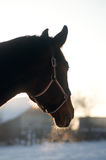 Horse portrait in winter. Rear view looking into the distance stock images