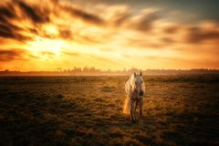 Horse and the Sunset royalty free stock photography