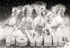 Horse power Royalty Free Stock Photography