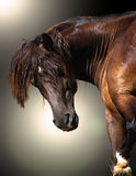 Horse Power. Horse looking back and showing his strength and the precious texture of his skin Stock Image