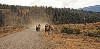 Horse Power. Running Horses near Big Sky, MT Royalty Free Stock Image