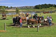 Horse Power threshing Royalty Free Stock Photography