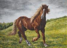 Horse on the prairie stock photos
