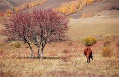 A horse in autumn prairie. A horse in prairie in autumn royalty free stock photos