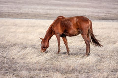 Horse in prairie Stock Image