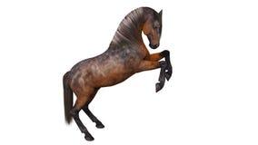 Horse prancing, hoofed animal  on white Stock Image