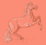 Horse prancing viewed side view. Hand sketched illustration of a horse prancing viewed from the side Stock Image