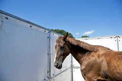Horse profil. In the open-air stable with blue sky in the background Royalty Free Stock Photography