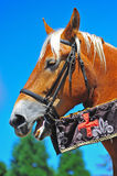 Horse profile. A portrait of a beautiful light brown mare with a blond main wearing a harness and the flags of a black knight at a Renaissance fair royalty free stock images