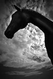 A horse profile in black and white Stock Images