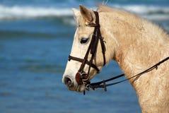 Horse profile head portrait stock images