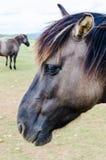 An horse, profile portrait Stock Photos