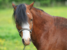 Horse profile Stock Images