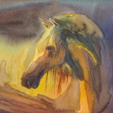 Horse profile square watercolor. Horse profile watercolor handmade square illustration. Evening colors Royalty Free Stock Images