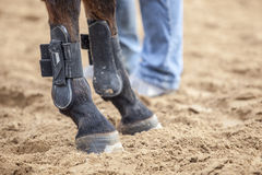 Horse protections boots for legs at jumping competition training. Detailed view of horse protections boots for legs at jumping competition training Stock Photos