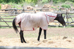Horse with Protective Covering Royalty Free Stock Photos