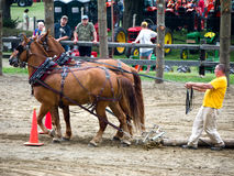 Horse Pull Competition. Draft horse competition at the 62nd Cornish Fair in Cornish, New Hampshire Stock Photography