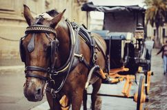 Horse Pulling Carriage In Sevilla Royalty Free Stock Photography