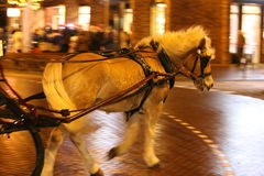 Horse. Pulling a sled Royalty Free Stock Image