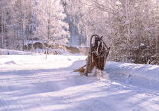 Horse pulling a sledge in winter sunny day Royalty Free Stock Photography