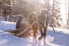 Horse pulling a sledge in winter sunny day Stock Images