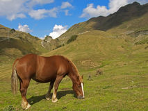 Horse at Pyrenees Stock Images