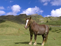 Horse at the Pyrenees Royalty Free Stock Photography