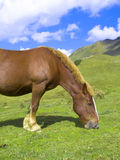 Horse at the Pyrenees Royalty Free Stock Photos