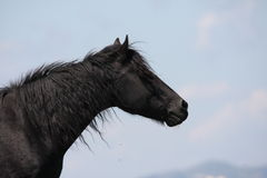 Horse in Pyrenees Royalty Free Stock Photos