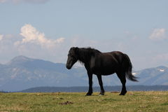 Horse in Pyrenees Royalty Free Stock Images