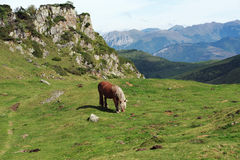 Horse in the Pyrenees Stock Photo