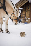 Horse and rabbit Royalty Free Stock Images