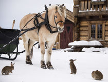Horse and rabbits Stock Image