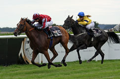 Horse race 08 Royalty Free Stock Images