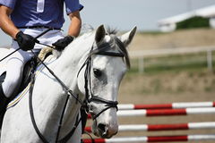 Horse on race. Horse portrait, high jump horse Stock Photos