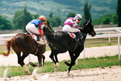 Horse race. Stock Image