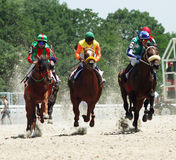Horse race. Royalty Free Stock Images