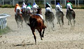 Horse race. Stock Photos