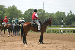 Horse Race. Horses come on to the track to begin racing Royalty Free Stock Photography