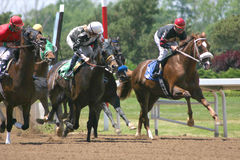 Horse Race. Horses Racing with nice stop action Royalty Free Stock Image