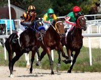Horse race. Royalty Free Stock Photos