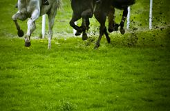 Horse race. Running horses during a horse race in blur motion with copy space Stock Photo
