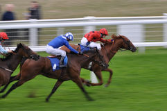 Horse race. 3 horses at the finish line of a horse race with jockeys on their backs Stock Image