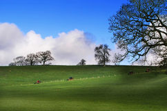 Horse race. English landscape with horse race in distance royalty free stock images