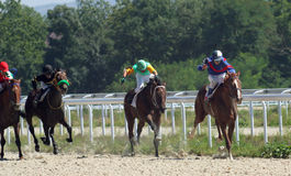 Horse race. Stock Photography