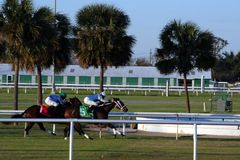 Horse Race. Two horses in the stretch at Fair Grounds racetrack in New Orleans Royalty Free Stock Photo
