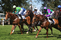 Horse Race. Horses running in the Royal Windsor Racecourse on 26 June 2011 royalty free stock photography