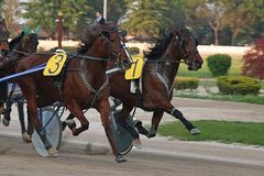 Horse race. Some beautiful photos of a grand prix in Italy royalty free stock image